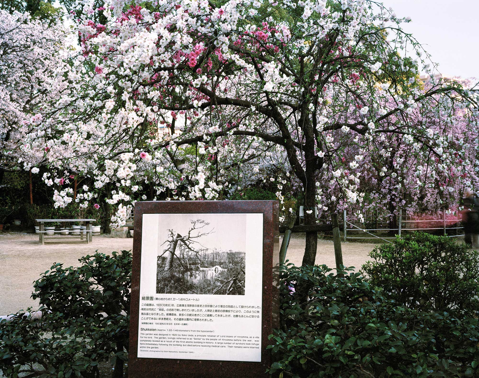 Shukkeien Garden, Hiroshima, about 1,250 -1,460 meters from the hypocenter, photograph by Elichi Matsumoto, September 1945, April 2013, Chromogenic print, 30 x 40 inch.
