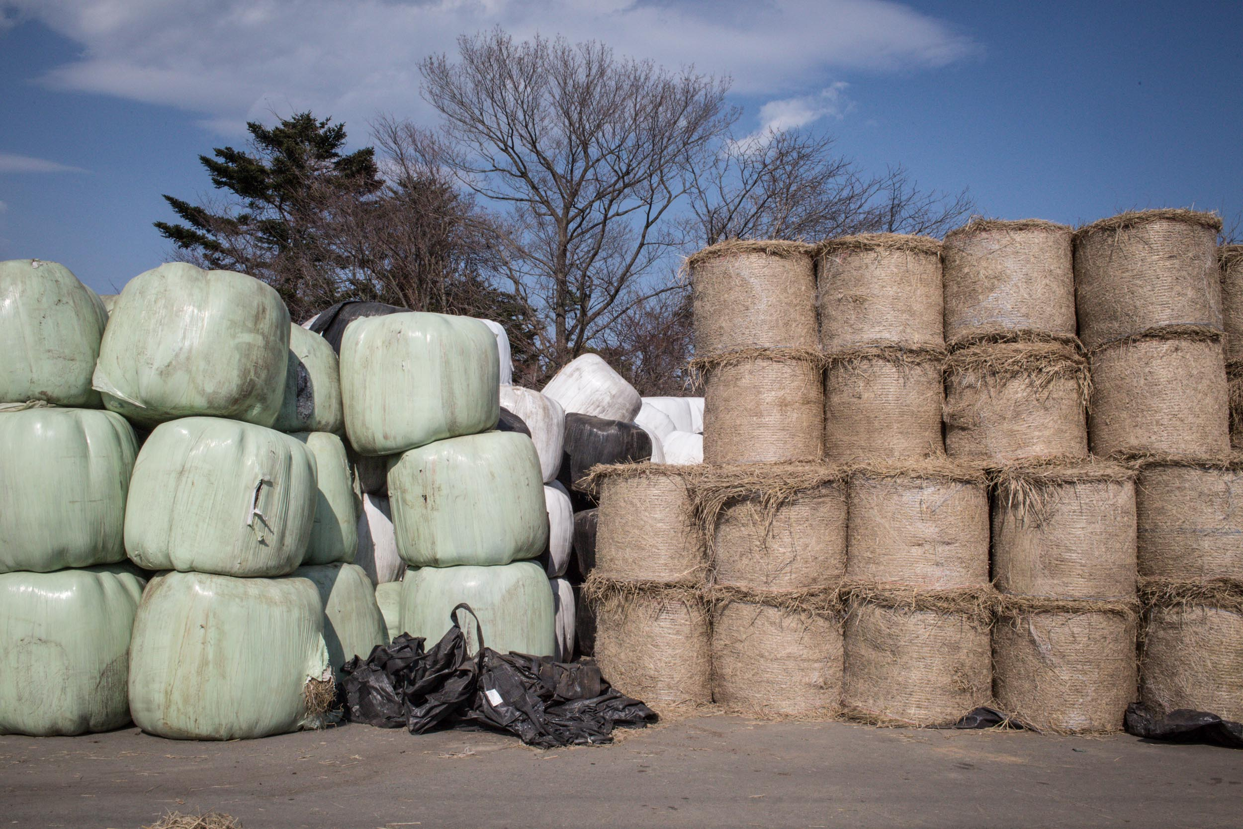 Rolls of grass sent to the Ranch of Hope by people from other parts of Japan. Kibo no Bokujo or the Ranch of Hope is run by Mr Masami Yoshizawa who decided not to kill the cattle as ordered by the government after evacuation orders were issued for the residents within 20kms of the accident zone. Today there are over 330 cattle being taken care of in the Ranch of Hope. All grass in the region was contaminated due to the nuclear accident.